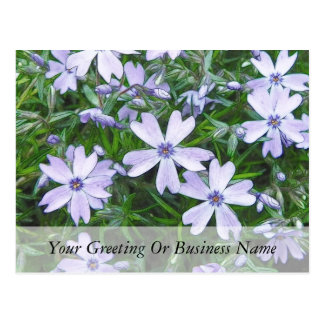 Petty Blue Creeping Phlox Postcard