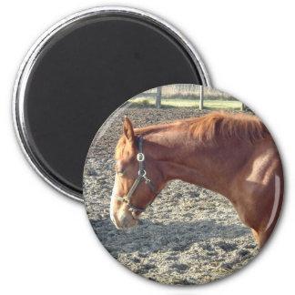 Petty Chestnut Horse 2 Inch Round Magnet