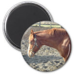 Petty Chestnut Horse Magnets