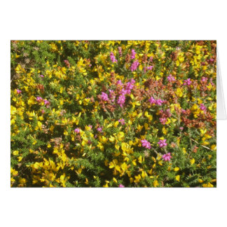 Petty Whin & Bog Heather Greeting Card