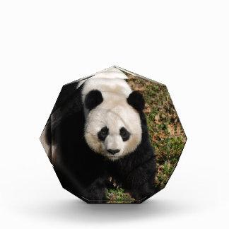 Petulant Panda Bear Award