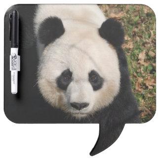 Petulant Panda Bear Dry-Erase Board