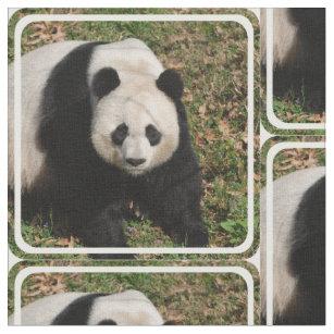 Petulant Panda Bear Fabric 014ec020dd1