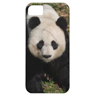 Petulant Panda Bear iPhone SE/5/5s Case