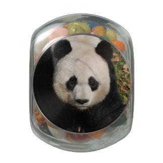 Petulant Panda Bear Jelly Belly Candy Jars