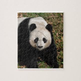 Petulant Panda Bear Jigsaw Puzzle