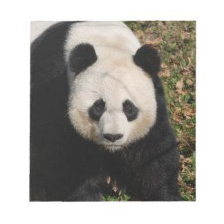 Petulant Panda Bear Note Pad