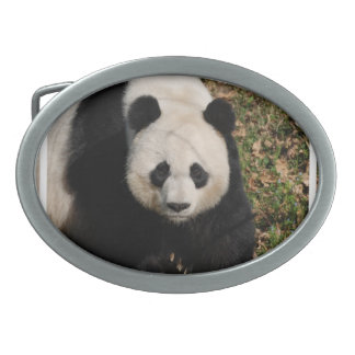 Petulant Panda Bear Oval Belt Buckle