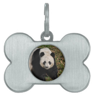 Petulant Panda Bear Pet Name Tag