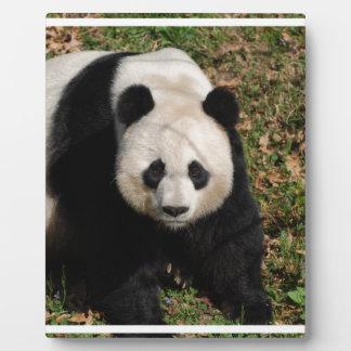 Petulant Panda Bear Plaque