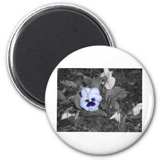 Petunia azul clara iman