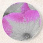 Petunia bordeada rosa posavasos cerveza