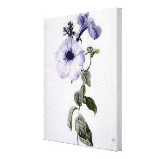 Petunia Stretched Canvas Prints
