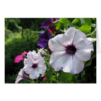 Petunia colorida tarjeta de felicitación