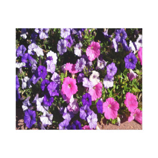 Petunia Flower Patch Canvas Print