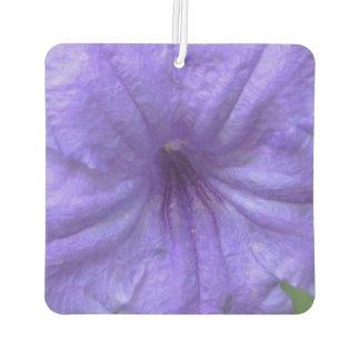 Petunia Mexican Purple