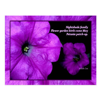 Petunia Patch Flower Family Postcard