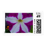 Petunia Postage Stamps