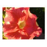 Petunia Postcard - Bold Coral Red