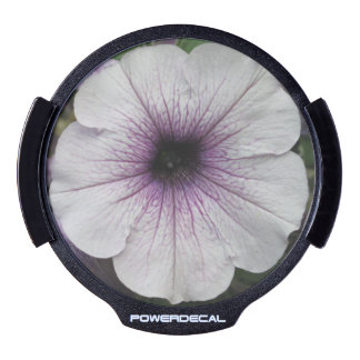 Petunia Purple Close LED Car Window Decal