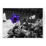 Petunia púrpura oscura tarjeta