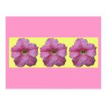 Petunia rosada postal