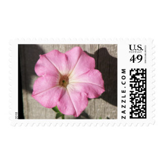 Petunia rosada