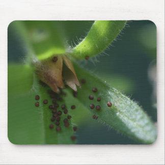 Petunia Seedpod Mousepad de la explosión Tapete De Ratones