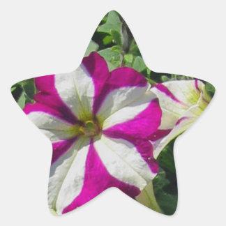 Petunia Star Sticker