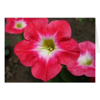 petunias cards