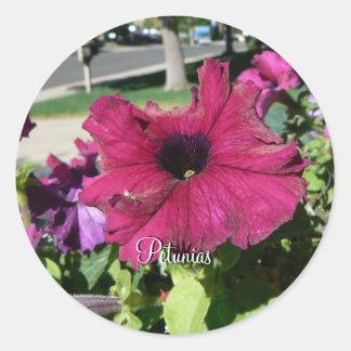 Petunias Classic Round Sticker