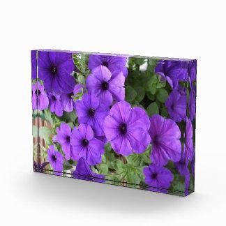 Petunias for Garden Week Acrylic Award