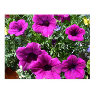 Petunias for Mom's Special Day Postcard