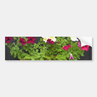 Petunias Hanging In The Pot On The Wooden Wall Bumper Stickers