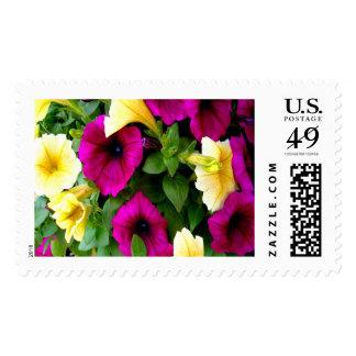 Petunias Large Postage