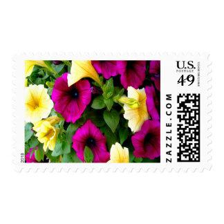 Petunias Medium Postage