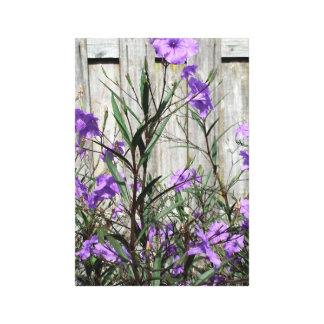 Petunias mexicanas púrpuras bonitas por una cerca impresión en lienzo