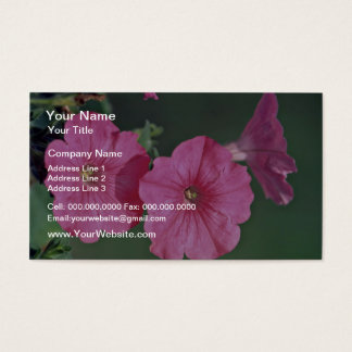 Petunias Pink flowers Business Card