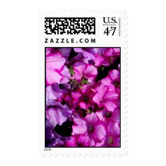 Petunias Postage