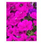 Petunias púrpuras membrete a diseño