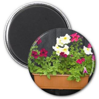 Petunias que cuelgan en el pote en la pared de mad iman de nevera