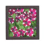 Petunias rayadas rojas y blancas cajas de regalo de calidad