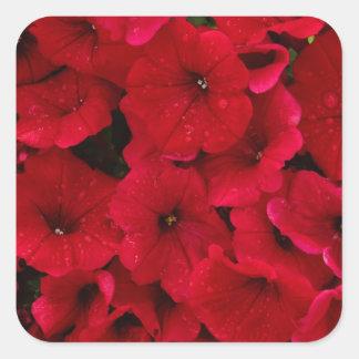 Petunias rojas de la gota de lluvia pegatina cuadrada