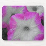 Petunias rosadas alfombrillas de ratones