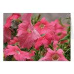 Petunias rosadas tarjeta de felicitación