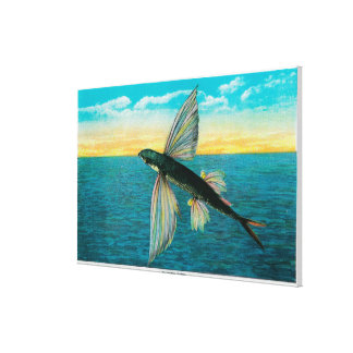 Pez volador en la isla de Catalina Lona Estirada Galerías