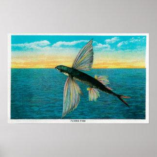 Pez volador en la isla de Catalina Póster