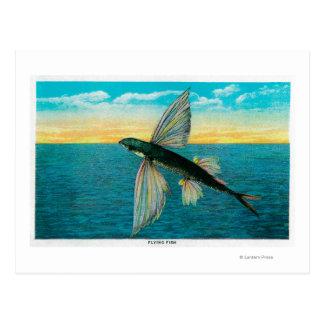 Pez volador en la isla de Catalina Postales