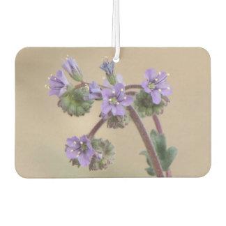 Phacelia Purple Wildflowers