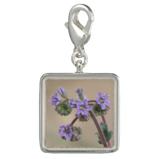 Phacelia Purple Wildflowers Charms